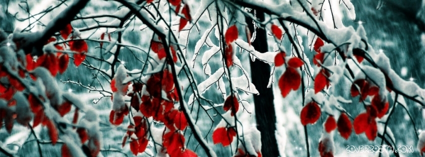 Red Leaves Winter Snow Facebook Cover Deborah Chapman Newell