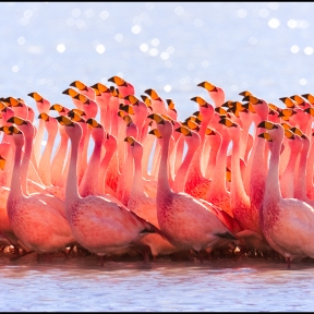 Re-processing of my previous flamingo photo to show all different view.